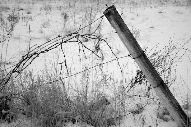 20130128_Orchard Fenceedit_1383 as Smart Object-1
