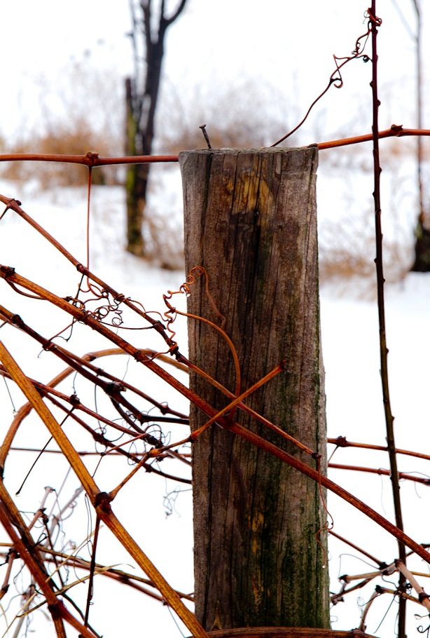 20130128_Orchard Fenceedit_1406 as Smart Object-1