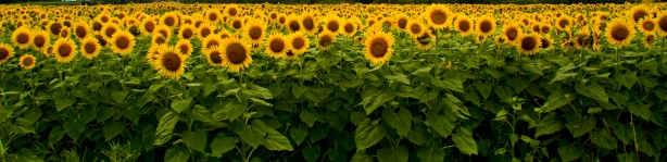 20120726_3 Lakes and Sunflowers_6376